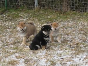 Från vänster; Chonix Mineto, Chonix Masahiro och Chonix Maiko
