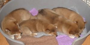 Så här trötta blev de efter fotograferingen.