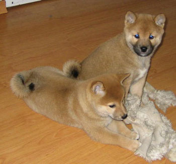 Ayaka&Akio-8v