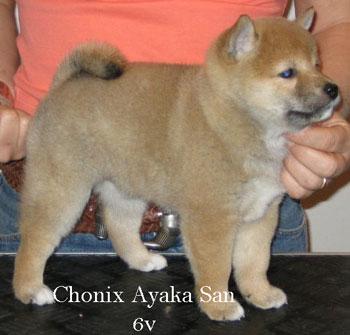 Chonix-Ayaka-San-6v