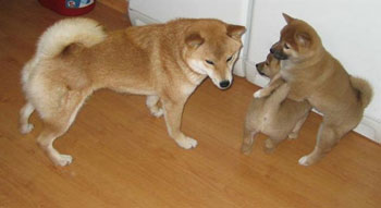 Miko-med-Sashi&Ayaka