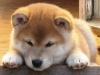 Chonix_Fumihiro-7veckor_(4)