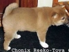 Chonix-Reeko-Toya-6-veckor