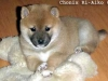 Chonix-Ri-Aiko_5-veckor