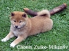 Chonix-Zuiko-Mikan8v